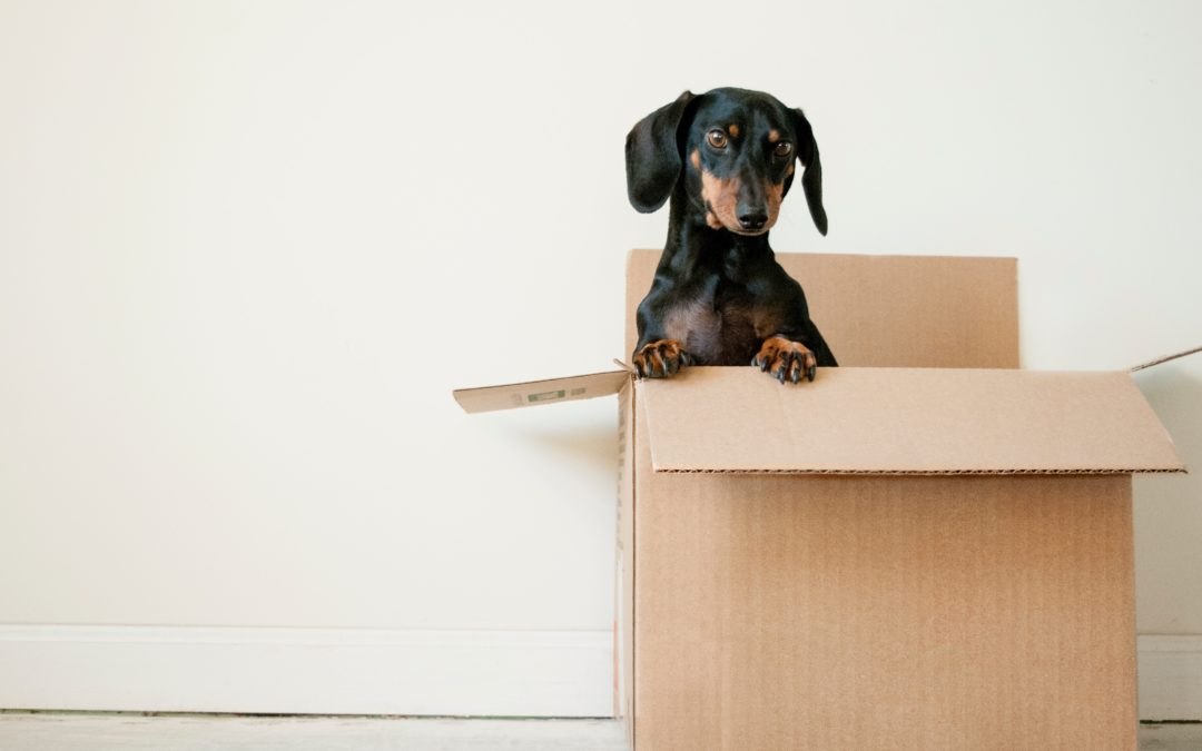 5 conseils pour débarrasser sa maison avant un déménagement